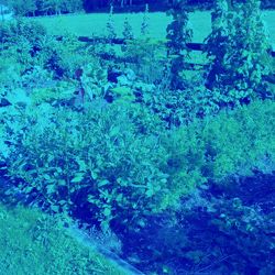 Your Own Vegetable Allotment